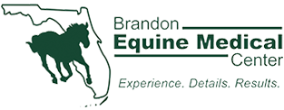 Brandon Equine Medical
